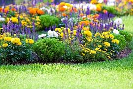 Půvabné trvalky pro letní záhony zkrášlí vaši zahradu