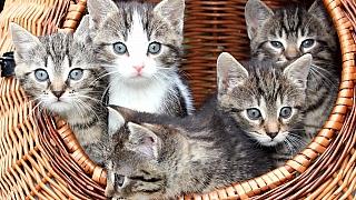 Nevíte, jak se postarat o koťě? Prozradíme vám, co je pro něj důležité