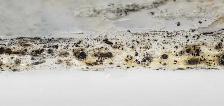 Jak plíseň vzniká? Především z vlhka