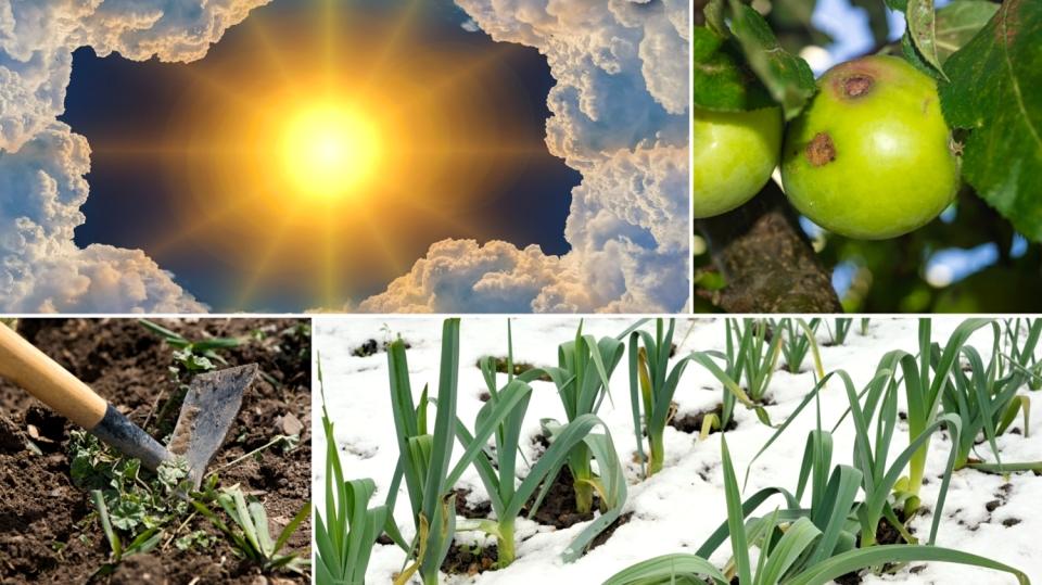 Předpověď počasí na 20. a 21. října: Tipy, co se dá dělat ovíkendu na zahradě