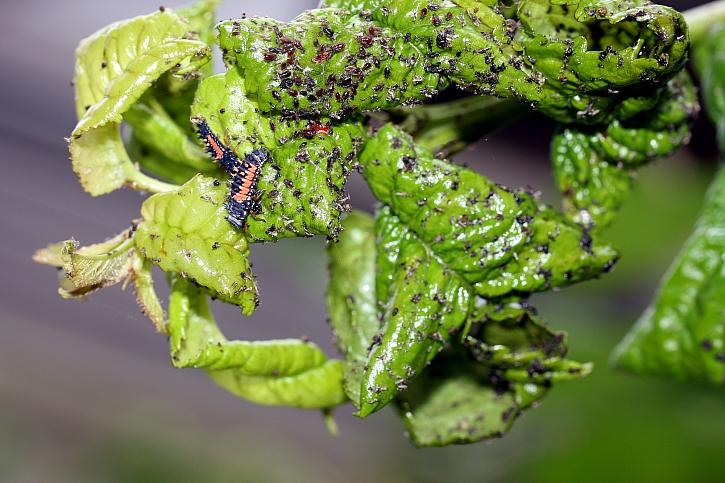 Zbavte zahradu nejrůznějších škůdců a ochraňte své rostliny (Zdroj: Depositphotos)