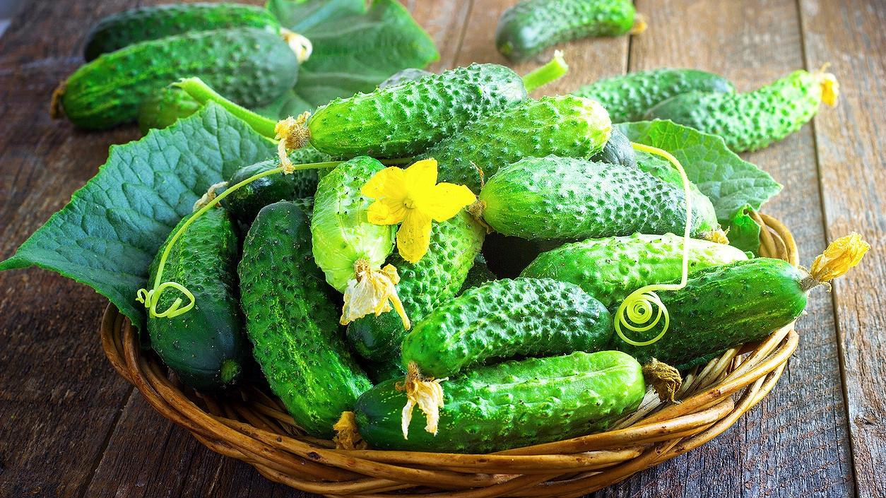 Jak si vypěstovat okurky: Rod Cucumis má stále co nabídnout, čím zaujmout i překvapit