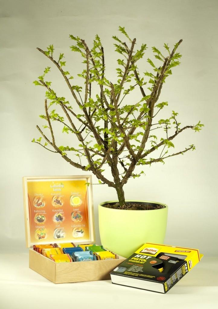 Čajový strom -Jak vytvořit netradiční dárek
