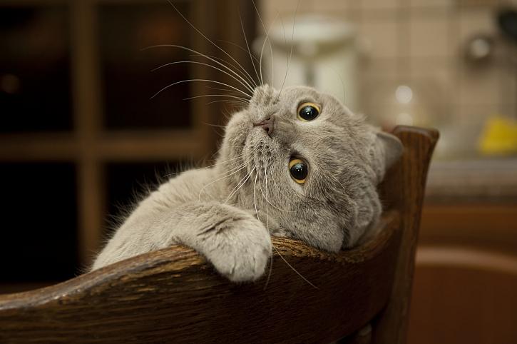 Starejte se o zdraví a vitalitu vašich kočiček (Zdroj: Depositphotos)