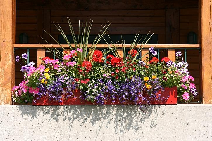 osázená nádoba kvetoucími rostlinami