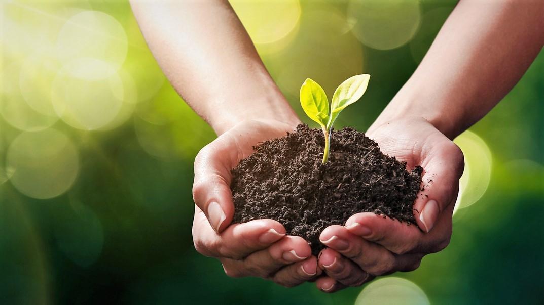 Znáte starý dobrý zahrádkářský trik, jak urychlit klíčení semínek?
