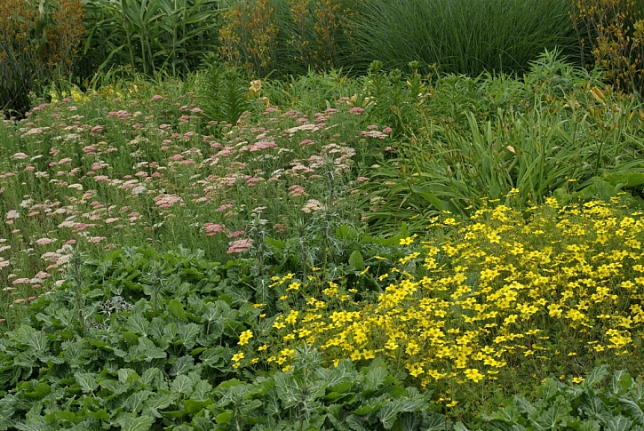 Víceleté, vysokorostoucí druhy bylinek sázíme spíše dozadu