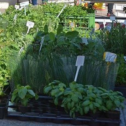 Farmářské trhy Bohumín