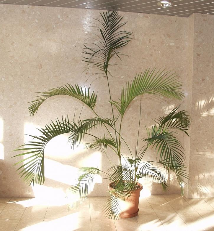 Pokojové rostliny do velkých prostor