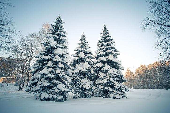 Les v zimě vybízí k vánočnímu pohoštění pro zvířátka (Zdroj: Depositphotos)