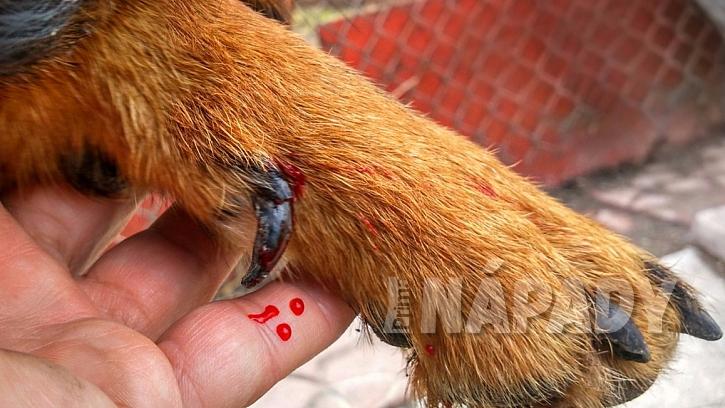 Jak poskytnout první pomoc zraněnému mazlíčkovi  2