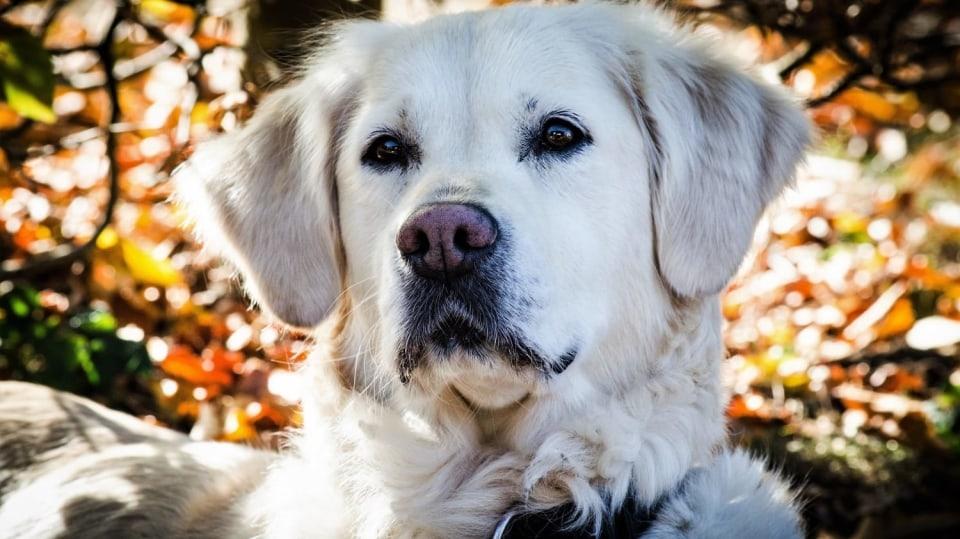 Šťastný pes: Jak často venčit? Jak dlouho může být sám doma? Jak správně krmit?