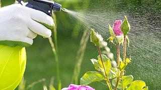 Jak vyhnat škůdce ze zahrady bez chemie: Využijte přirozené zbraně a vyberte si za spojence byliny