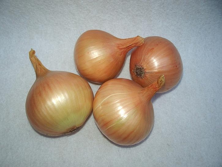 Ozimá cibule