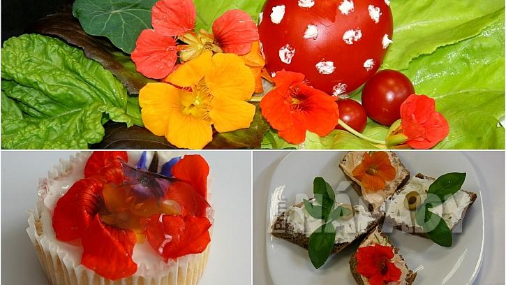 Jedlé květy lichořeřišnice jako ozdoba salátů, jednohubek i zákusků