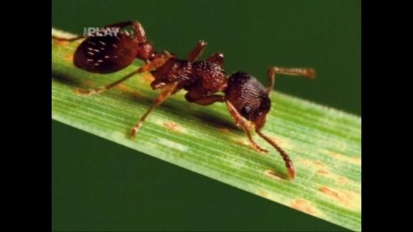 Přípravky proti škůdcům a chorobám