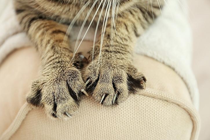 Odnaučit kočku škrábat nábytek je občas těžké (Zdroj: Depositphotos)