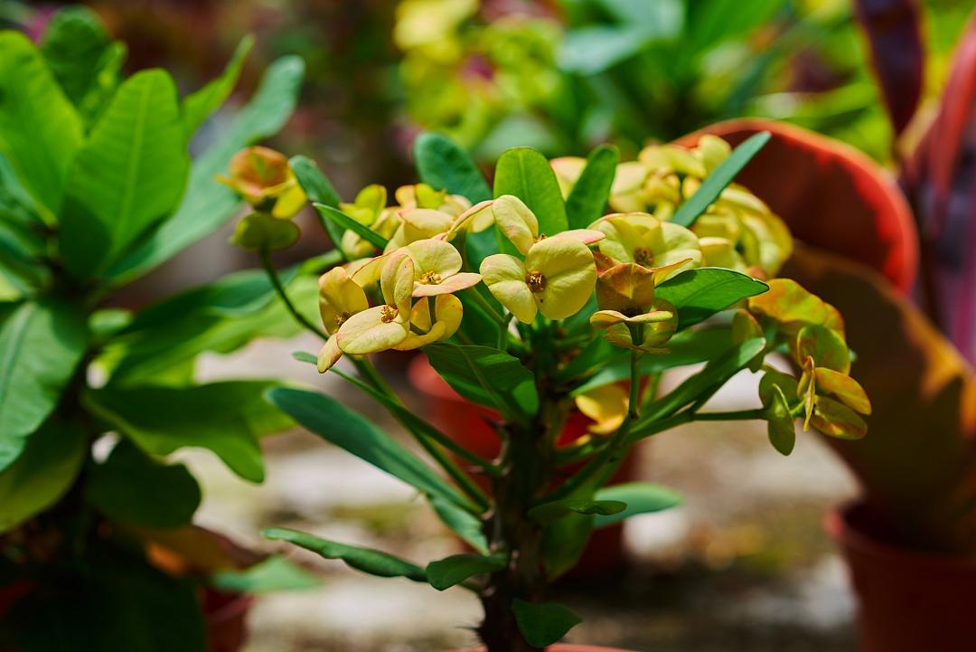 obrázek tématu: Exotické rostliny v domácnosti
