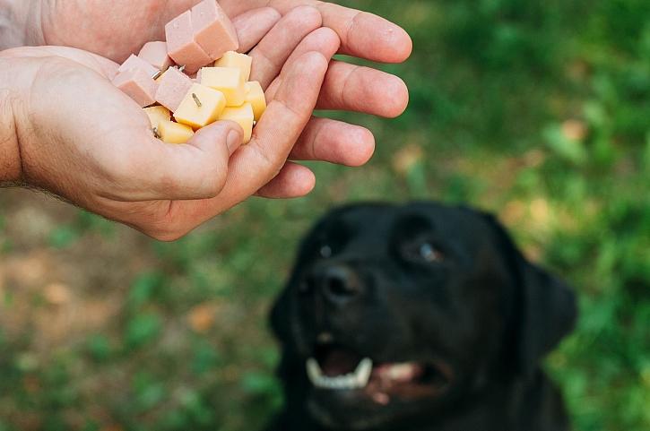 Zopakujte si zásady první pomoci u zvířat v případě otravy, můžete jim tím zachránit život (Zdroj: Depositphotos)