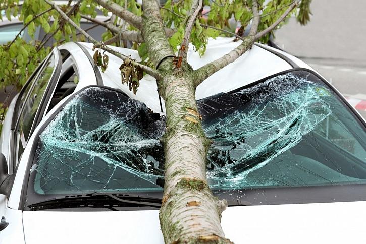 Když je strom nebezpečný, funguje to jinak