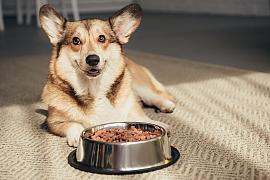 BARF metoda krmení psů