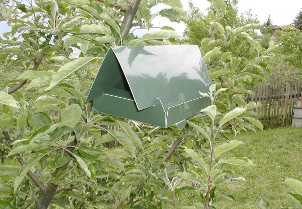 Ochrana jabloní proti červivosti