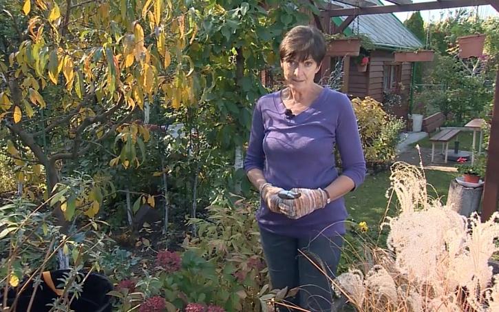 Zazimování choulostivých rostlin