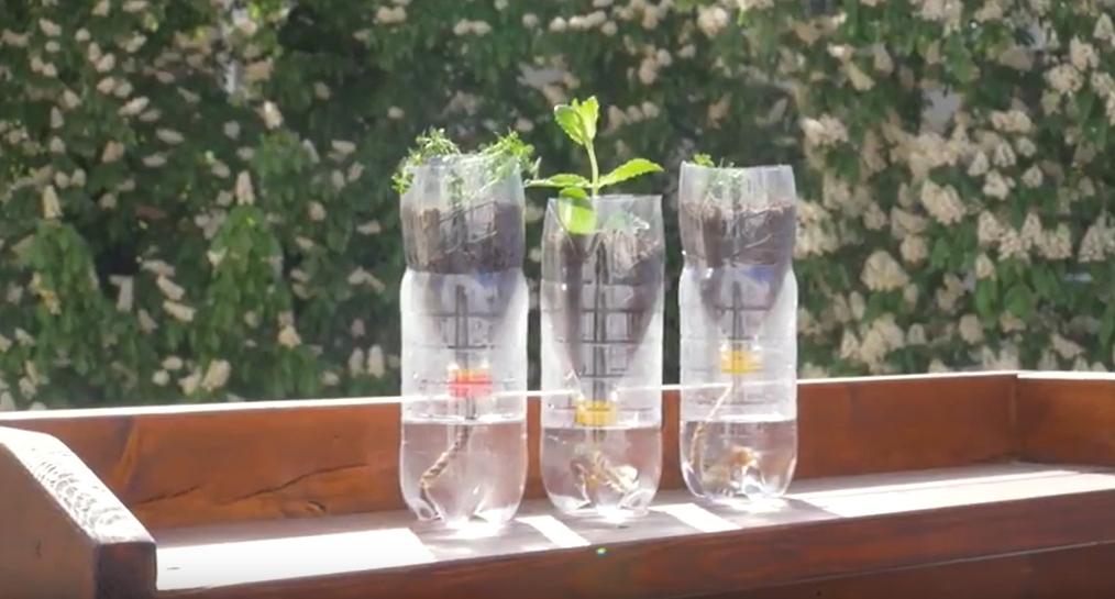 Samozavlažovací květináč z PET lahve