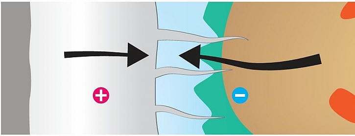 3. Ionty vstupují do buněčné stěny a zeslabují ji.