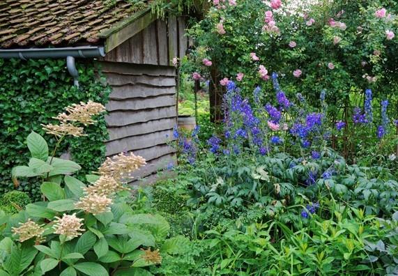 Tip: Ostrožka, stračka a rodgersie kvetou po dlouhou dobu a nevyžadují žádnou přílišnou péči.