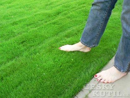Přihnojení trávníku