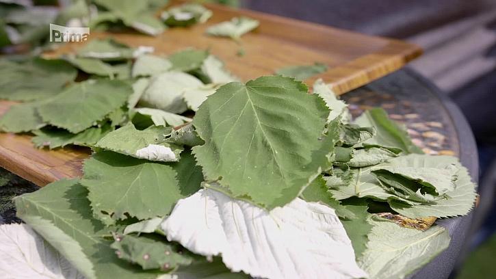 Je nejvyšší čas na vysetí špenátu a přípravu zimního čaje (Zdroj: Zimní čaj a vysévání špenátu)