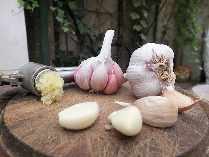 Výsadba a moření česneku