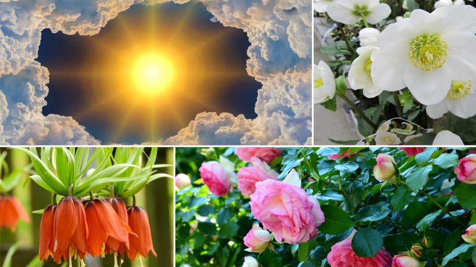 Předpověď počasí na třetí srpnový víkend + rychlé rady do zahrady