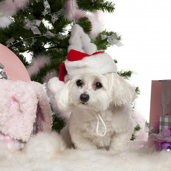 Vánoce s mazlíčky