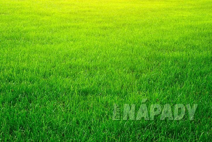 Zelený anglický trávník