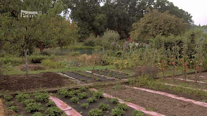 Pěstujeme zeleniny s krátkou vegetační dobou