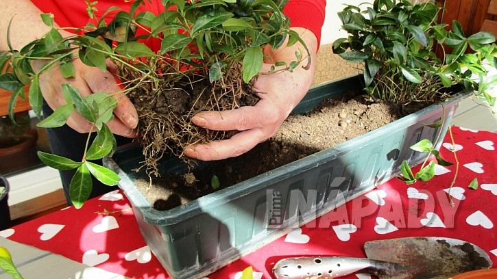 Jak si udělat svěží květinový truhlík aneb jaro je tady  4