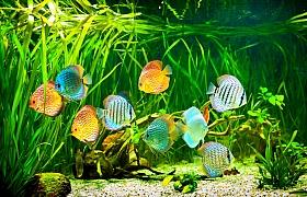 Nejčastější nemoci akvarijních rybek, jejich léčba a prevence