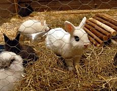 Postavte svým ušákům králíkárnu