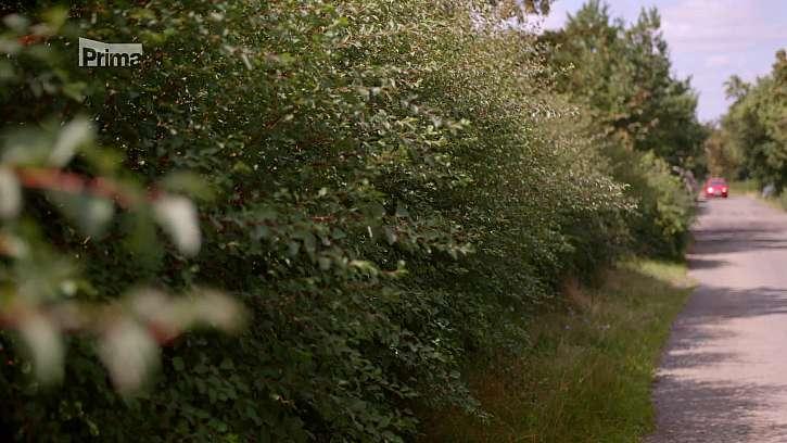 Přerostlé křoví za plotem.