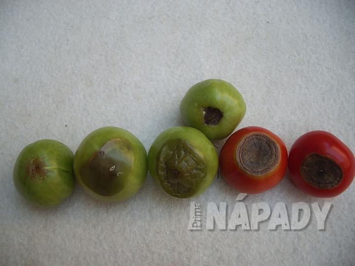 Nedostatek vápníku u rajčat