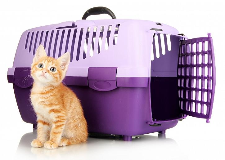 Kotě s přepravkou
