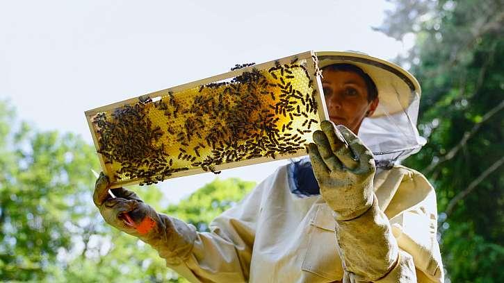 Lenka se svými včelami.