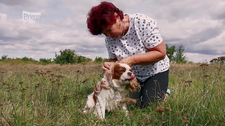 Osiny a sametky u psa jsou problém (Zdroj: Osiny a sametky u psa)
