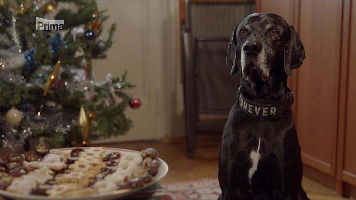 Víte, čím krmit svého psa o Vánocích? (Zdroj: Jak krmit psa o Vánocích)