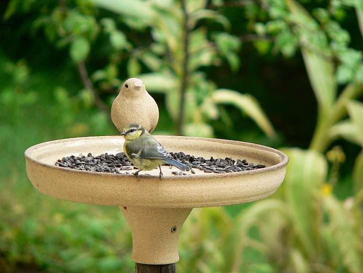 Krmítko pro ptáky