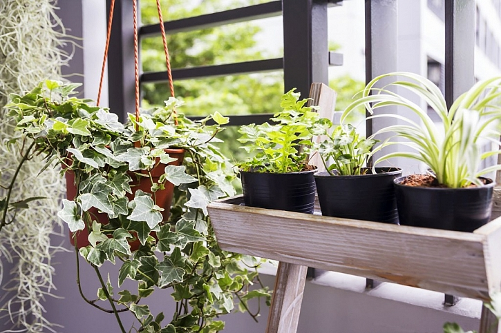 Lodžie nebo balkon se zasklením se osvědčí jako zimní zahrada