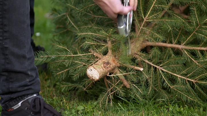 Štípání větví