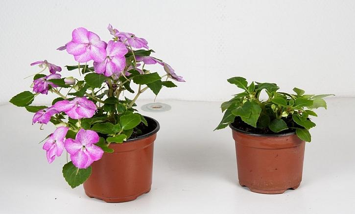 Správná výživa pro rostliny vám pomůže mít nejkrásněji rozkvetlé truhlíky v ulici